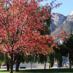 Foliage Lago di Garda