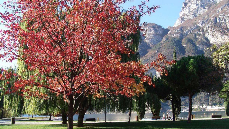 Vacanze d'autunno sul Lago di Garda